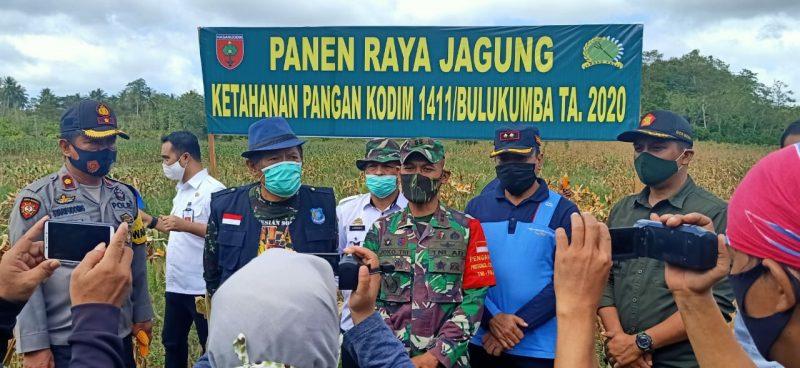 Bupati dan Dandim Bulukumba panen raya jagung di desa Swatani, Rabu (5/8/2020).