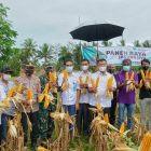 Perayaan Panen Raya Jagung yang dihadiri oleh Bupati Bulukumba di Desa Singa Kecamatan Herlang, Rabu (22/09/2021). Foto: Dokumentasi Istimewa
