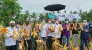 Hadiri Panen Raya Jagung, Andi Utta Berupaya Tingkatkan Sarana dan Prasarana Pertanian